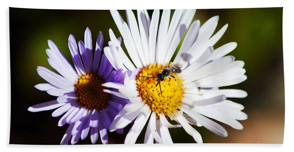 Wildflower Hand Towel featuring the photograph Pollination by Brian Kerls