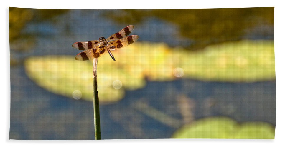 Dragonfly Hand Towel featuring the photograph Pond Visitor by Cheryl Baxter