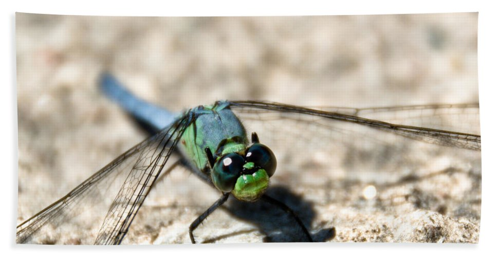 Dragonfly Hand Towel featuring the photograph Pondhawk Upclose by Cheryl Baxter