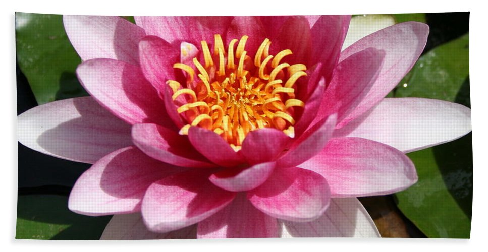 Waterlily Bath Sheet featuring the photograph Ponds Pride by Christiane Schulze Art And Photography