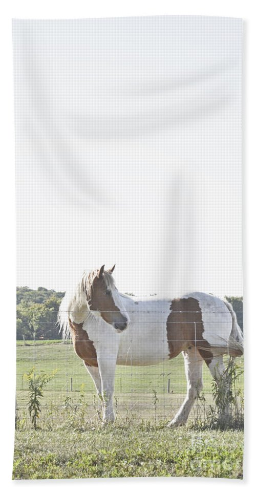 Pony Hand Towel featuring the photograph Pony Pride by Traci Cottingham