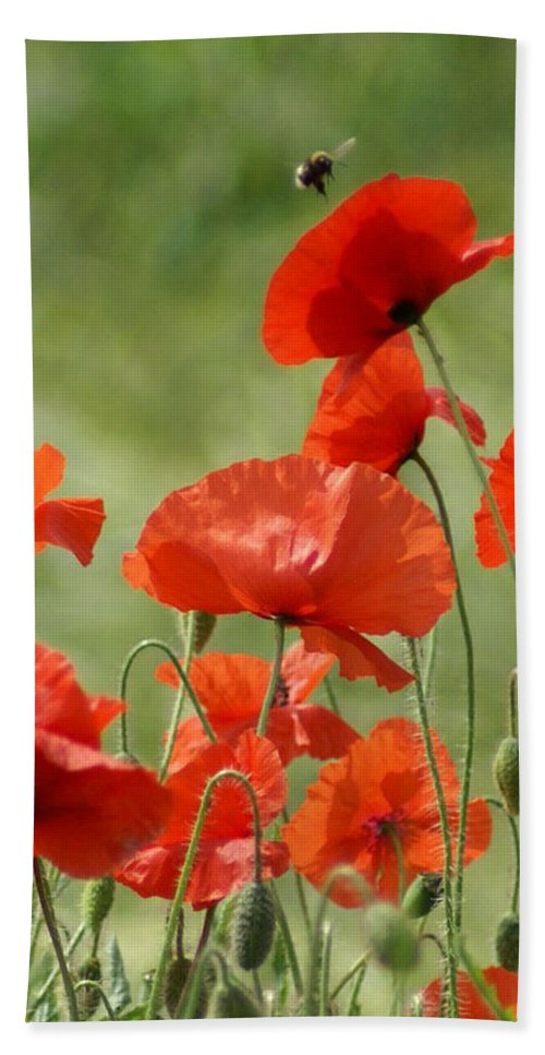 Poppies Hand Towel featuring the photograph Poppies 1 by Carol Lynch