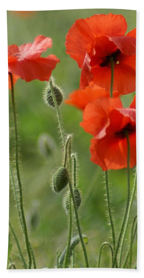 Poppies Hand Towel featuring the photograph Poppies 2 by Carol Lynch