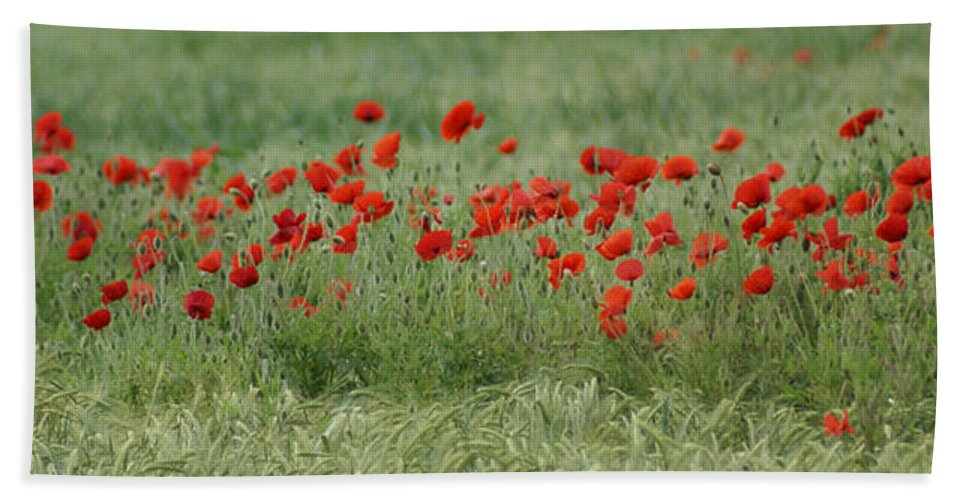 Poppies Hand Towel featuring the photograph Poppies by Carol Lynch