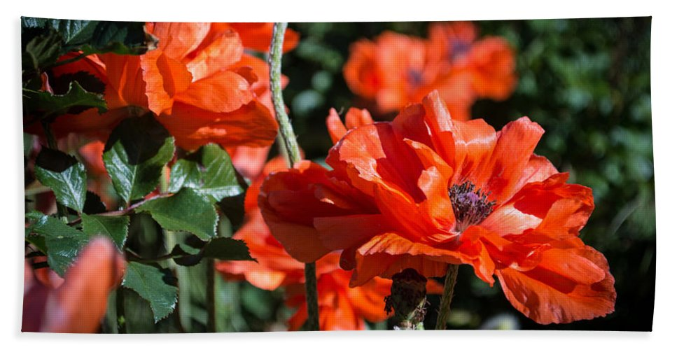 Poppies Hand Towel featuring the photograph Poppies by Debra Powell