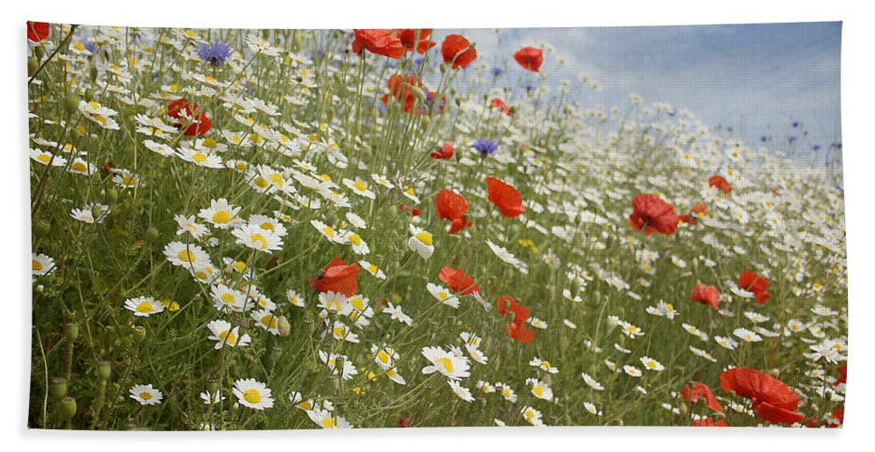 Poppies Bath Sheet featuring the photograph Poppies Et Al Iv by Jacqueline Moore
