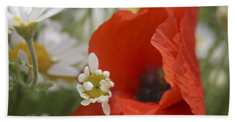 Poppy Bath Sheet featuring the photograph Close Up Of A Poppy With Daisies by Jacqueline Moore