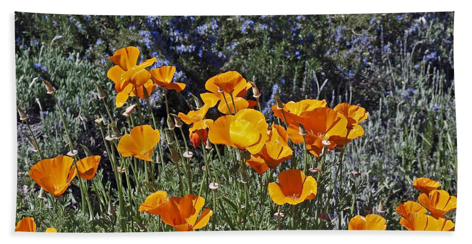 Flowers Hand Towel featuring the photograph Poppies by Howard Stapleton