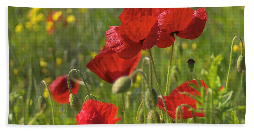 Poppies Bath Sheet featuring the photograph Poppies In Yorkshire by David Hare