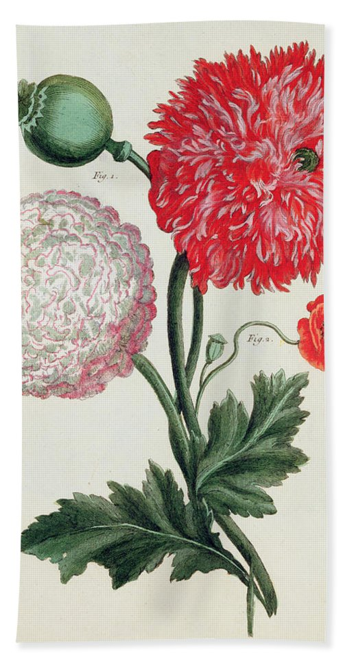 Botany Hand Towel featuring the painting Poppy by Basilius Besler
