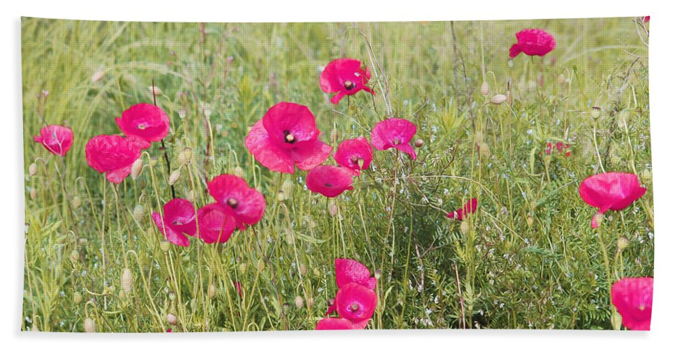 Pink Poppy Bath Sheet featuring the photograph Poppy Blush by P Donovan
