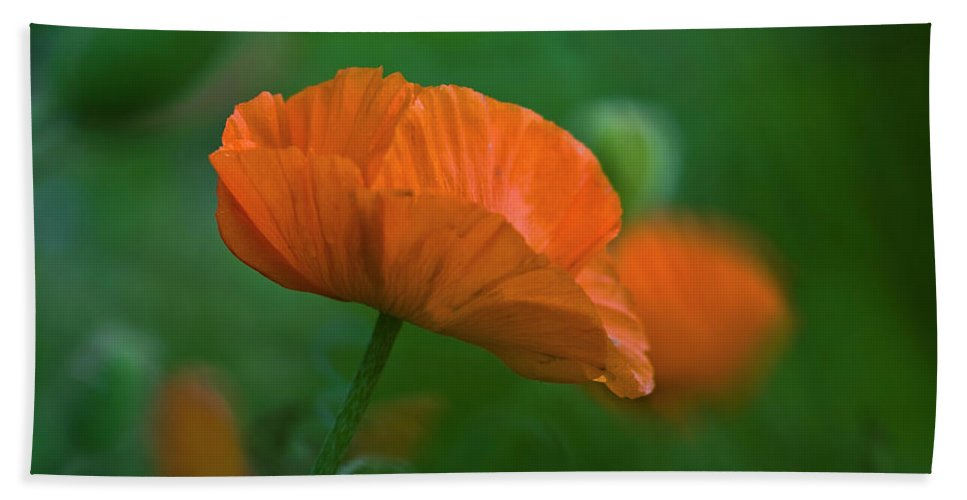 Poppy Hand Towel featuring the photograph Poppy Flower by Heiko Koehrer-Wagner
