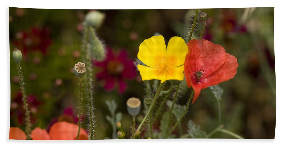 Poppies Bath Sheet featuring the photograph Poppy Love by Mark Greenberg