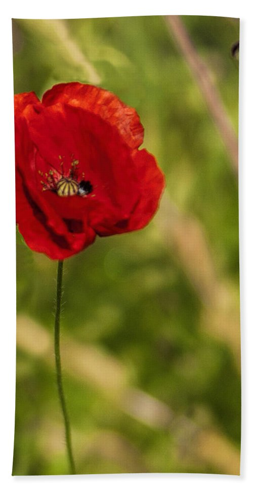 Poppy Bath Sheet featuring the photograph Poppy by Phyllis Taylor