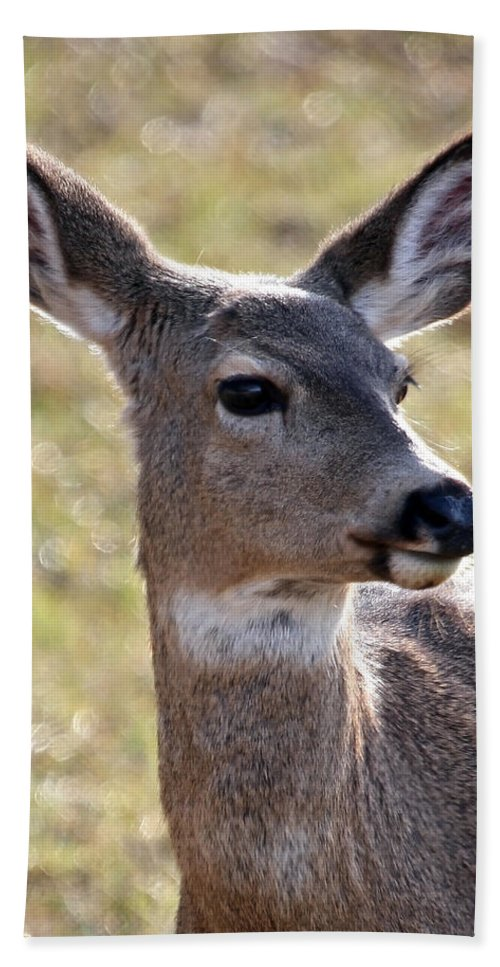 Deer Hand Towel featuring the photograph Portrait Of A Deer by Athena Mckinzie