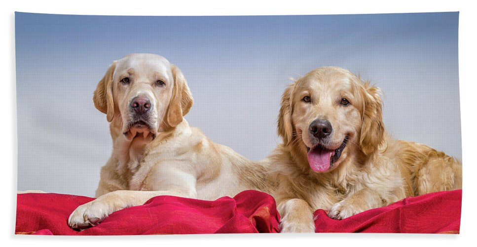 Photography Bath Towel featuring the photograph Portrait Of A Golden Retriever by Animal Images