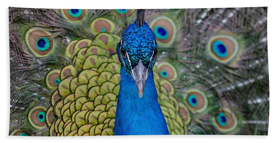 Peacock Hand Towel featuring the photograph Portrait Of A Peacock by Greg Nyquist