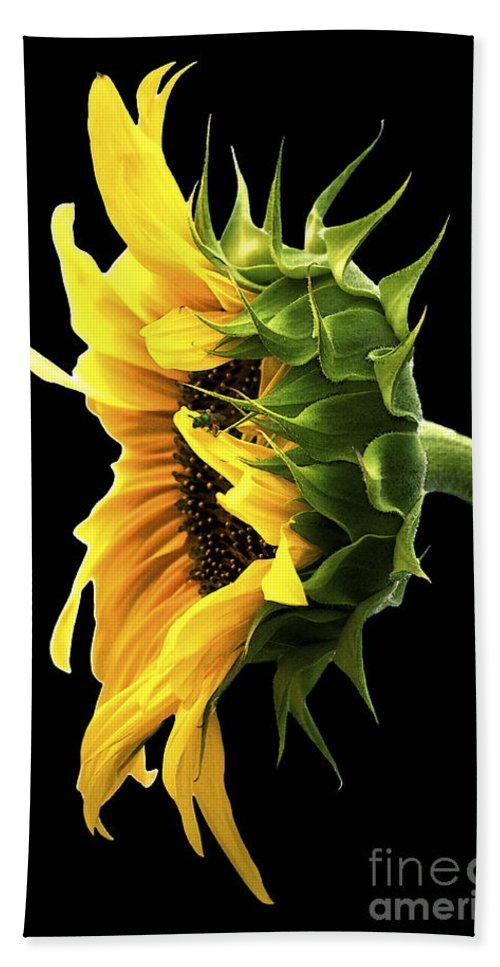 Sunflower Hand Towel featuring the photograph Portrait Of A Sunflower by Gwyn Newcombe