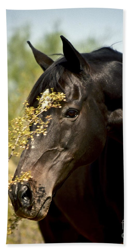 Horse Hand Towel featuring the photograph Portrait Of A Thoroughbred by Kathy McClure