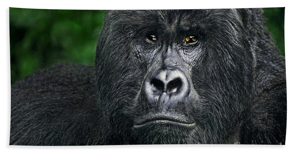 Africa Hand Towel featuring the photograph Portrait Of A Wild Mountain Gorilla Silverbackhighly Endangered by Dave Welling