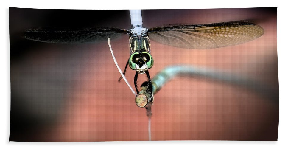 Blue Dasher Dragonfly Bath Sheet featuring the photograph Posing For You by Betty LaRue