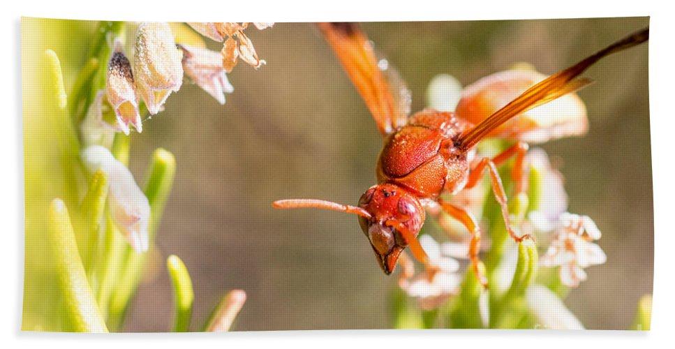 Eumenidae Bath Sheet featuring the photograph Potter Wasp Female by Jivko Nakev