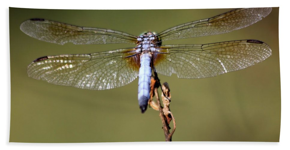 Dragonfly Hand Towel featuring the photograph Powder Blue by Kenny Glotfelty