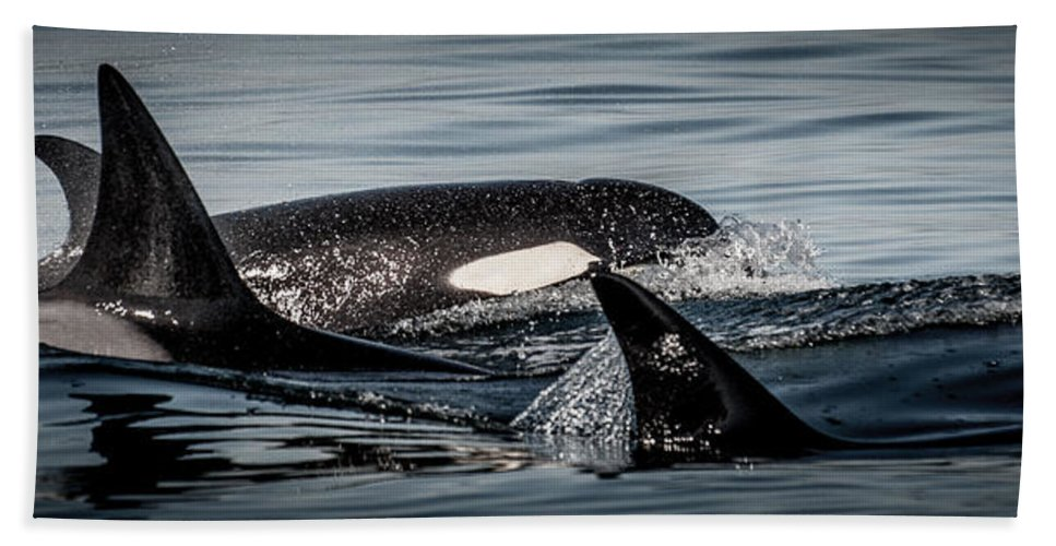 Orca Bath Sheet featuring the photograph Power Pod I by Roxy Hurtubise