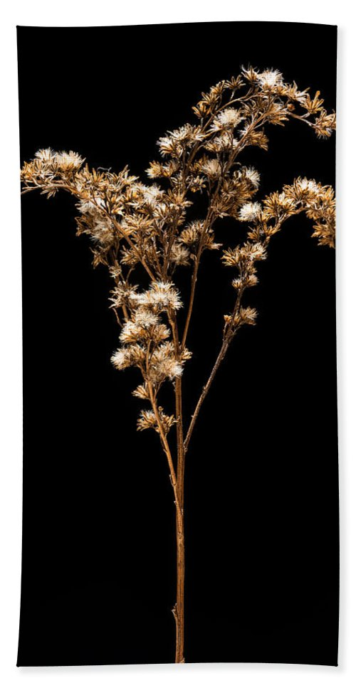 Grass Bath Sheet featuring the photograph Prairie Life Number 3 by Steve Gadomski