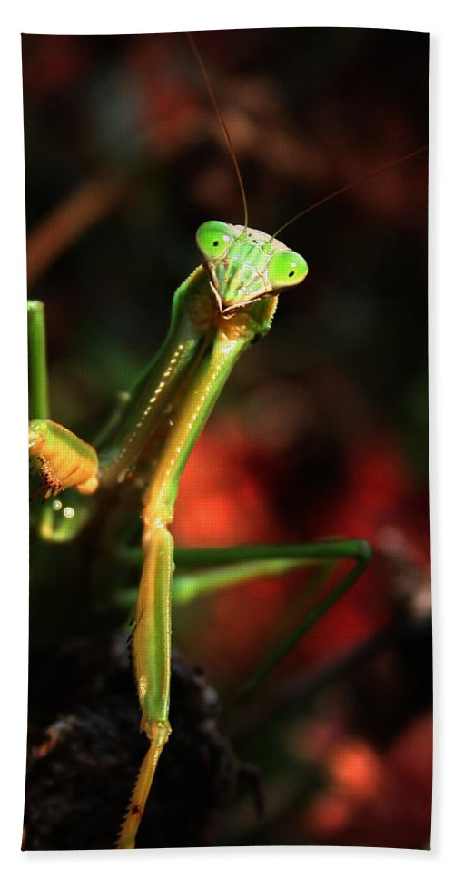 Praying Mantis Bath Sheet featuring the photograph Praying Mantis Portrait by Linda Sannuti