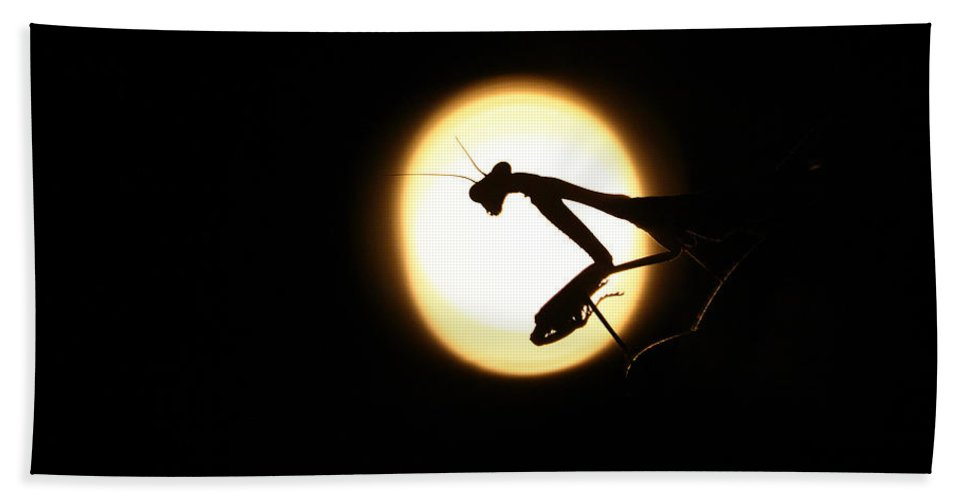 Praying Mantis Bath Sheet featuring the photograph Praying Mantis Silhouette by Danielle Shields