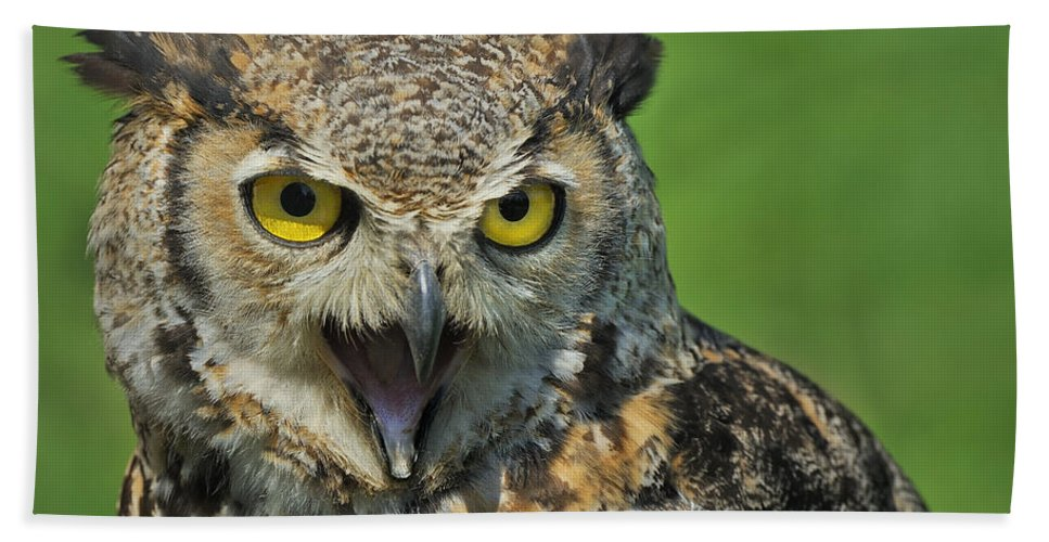 Great Horned Owl Bath Sheet featuring the photograph Predator by Tony Beck