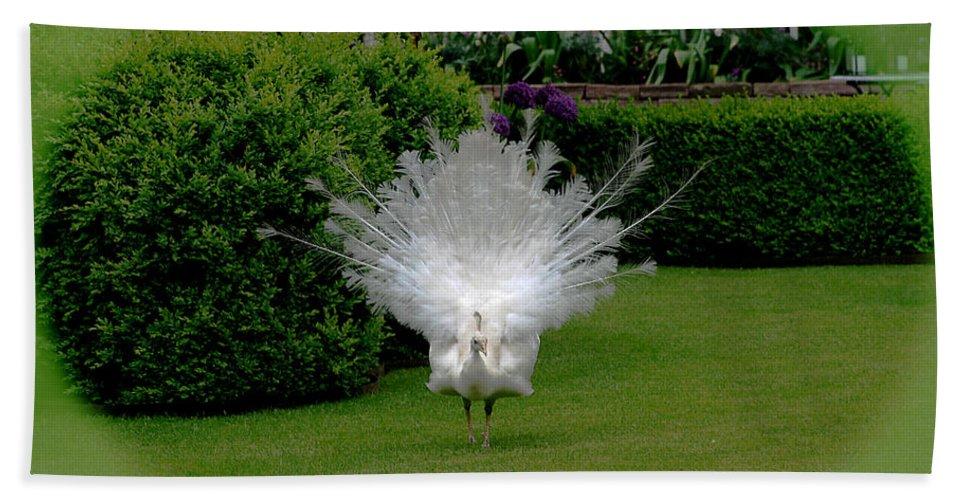 Pretty As A Peacock Bath Sheet featuring the photograph Pretty As A Peacock by Victoria Harrington