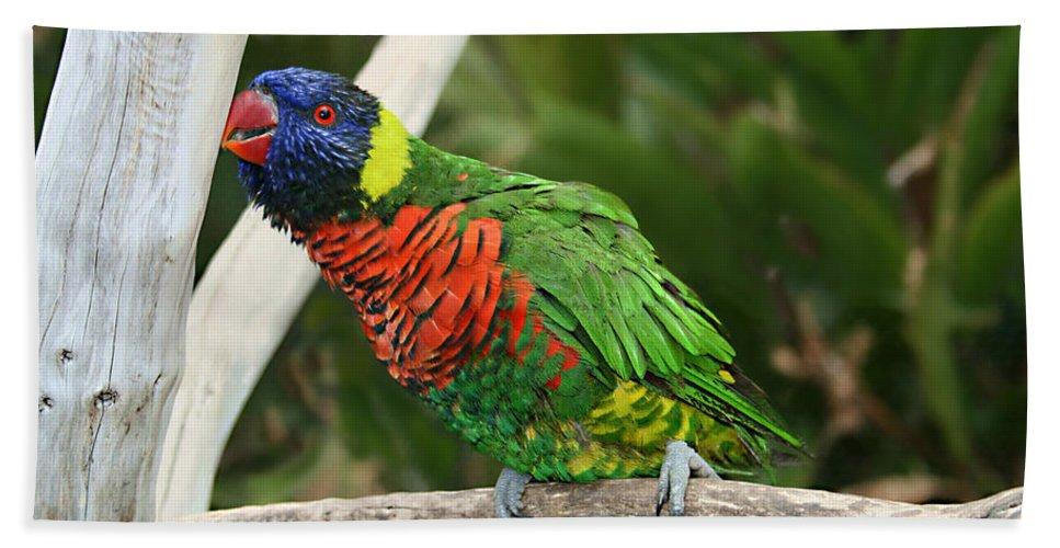 Pretty Bird Bath Towel featuring the photograph Pretty Bird by Ellen Henneke