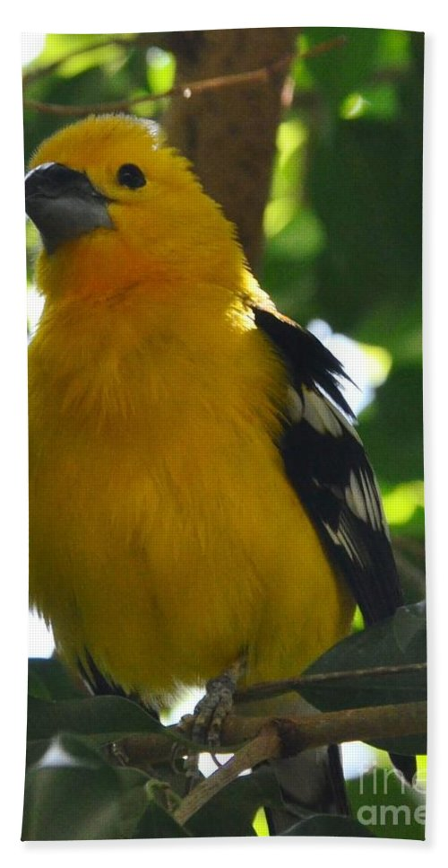 Yellow Bath Sheet featuring the photograph Pretty Bird by Kathleen Struckle