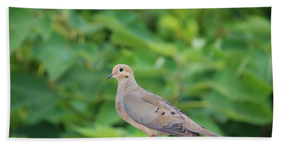 Birds Hand Towel featuring the photograph Pretty Dove by Cynthia Guinn