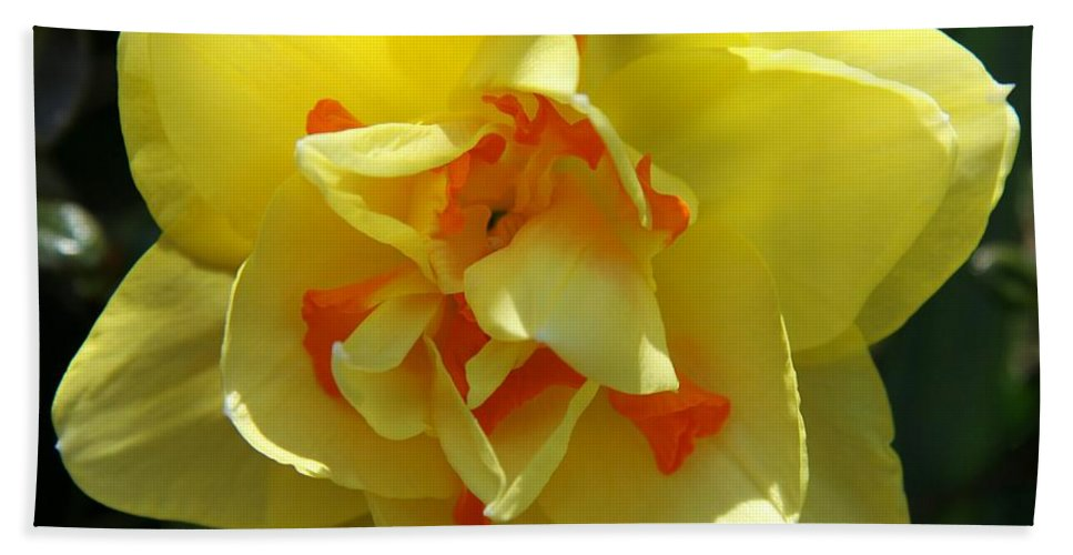 Daffodil Hand Towel featuring the photograph Pretty Face by Christiane Schulze Art And Photography