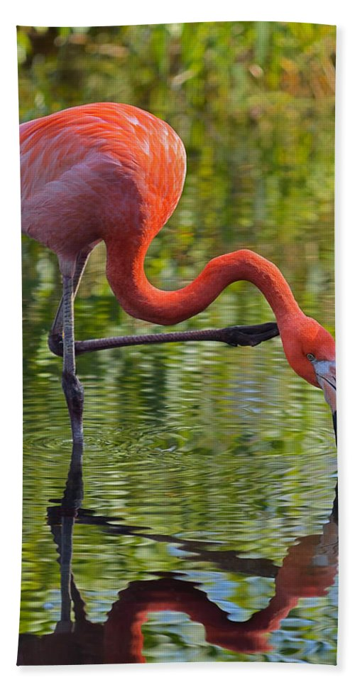Flamingo Bath Sheet featuring the photograph Pretty Flamingo by Dragan Kudjerski