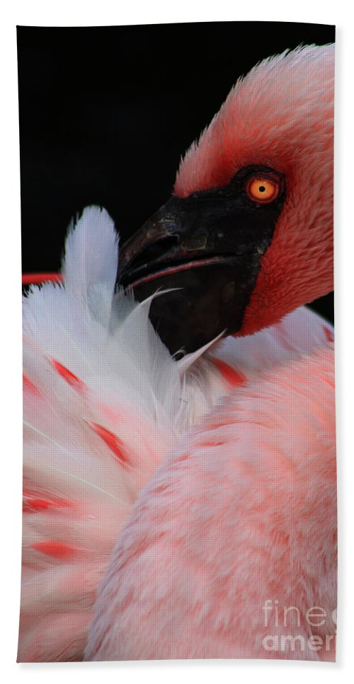 Bird Hand Towel featuring the photograph Pretty In Pink by Alyce Taylor