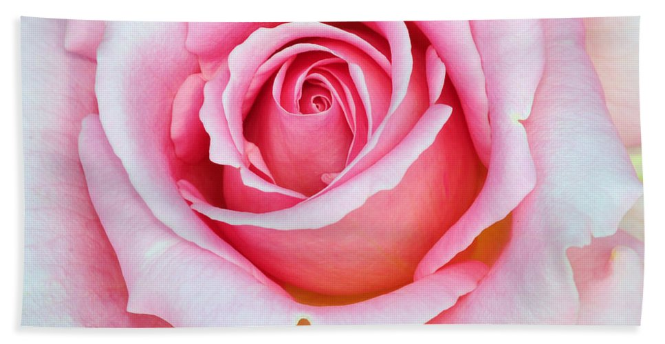 Rose Hand Towel featuring the photograph Pretty In Pink by Dave Mills