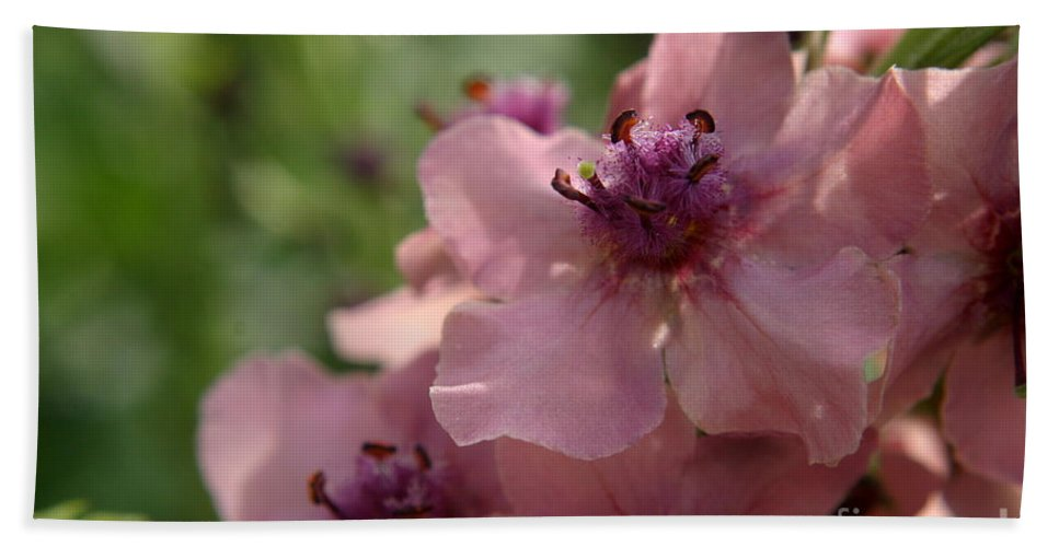 Pink Bath Sheet featuring the photograph Pretty In Pink by Kenny Glotfelty