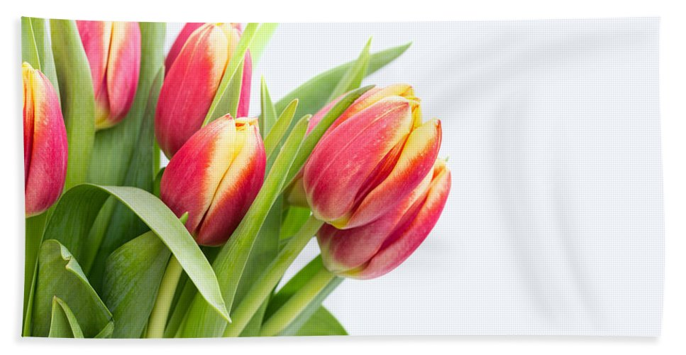 Easter Hand Towel featuring the photograph Pretty Red And Yellow Tulips On White Background by Carol Mellema
