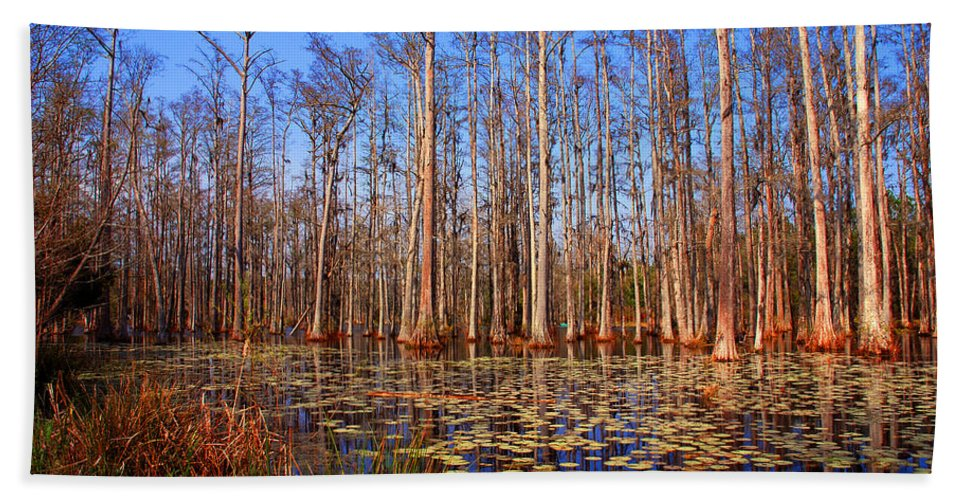 Swamp Hand Towel featuring the photograph Pretty Swamp Scene by Susanne Van Hulst