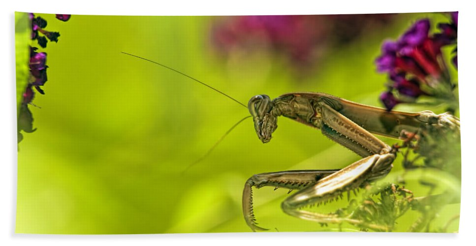 Preying Mantis Hand Towel featuring the photograph Preying Mantis by Geraldine Scull