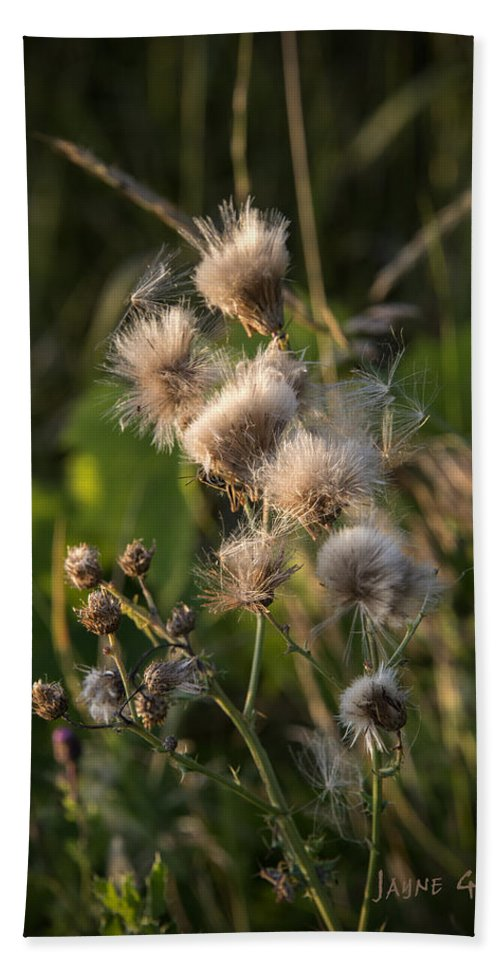 Thistle Hand Towel featuring the photograph Prickly Beauty by Jayne Gohr