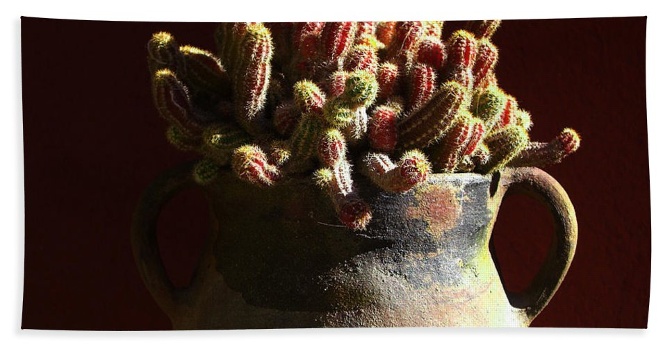 Chamaecereus Hand Towel featuring the photograph Prickly Padres by Xueling Zou