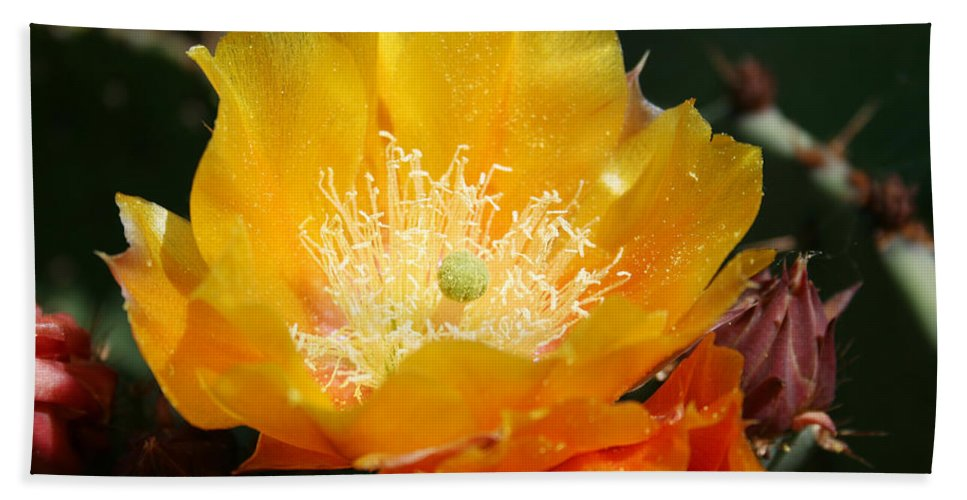 Prickly Pear Blossom Bath Towel featuring the photograph Prickly Pear Blossom by Ellen Henneke
