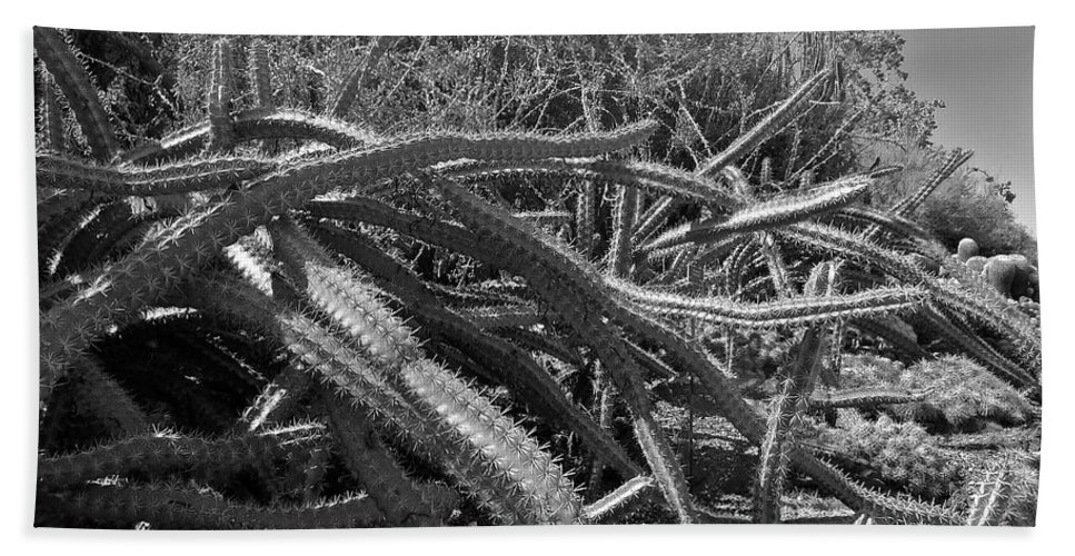 Black And White Bath Sheet featuring the photograph Prickly Perfection by Denise Mazzocco