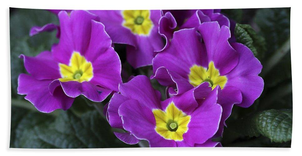 Flowers Bath Towel featuring the photograph Primrose Purple by Deborah Benoit