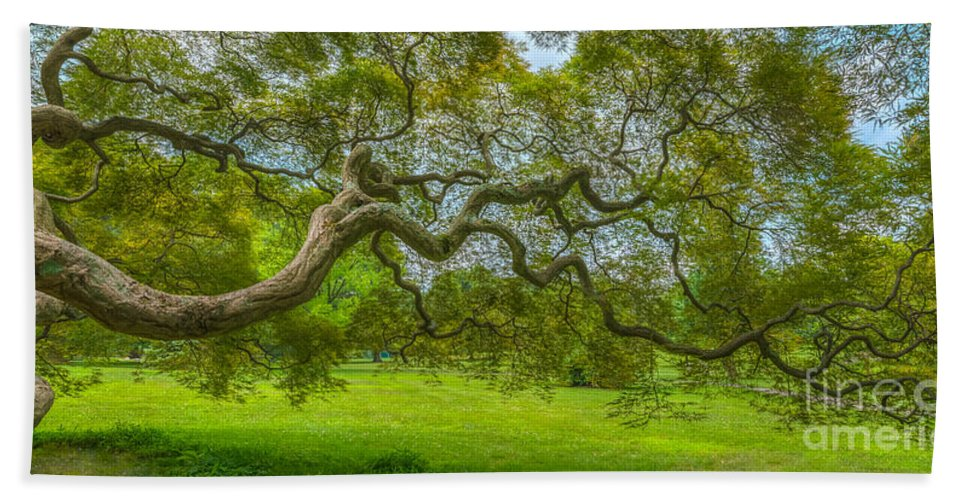Japanese Maple Tree Bath Sheet featuring the photograph Princeton Japanese Maple Tree by Michael Ver Sprill